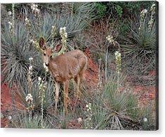 'wild' Times At Garden Of The Gods Colorado Acrylic Print