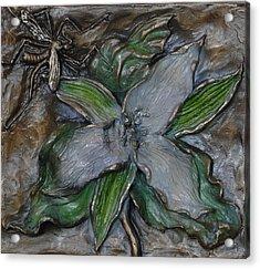 Wild Trillium And Cranefly  Acrylic Print by Dawn Senior-Trask