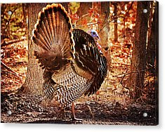 Acrylic Print featuring the photograph Wild Turkey by Angel Cher