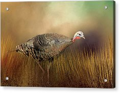 Acrylic Print featuring the photograph Wild Turkey Hen by Donna Kennedy