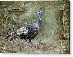 Acrylic Print featuring the photograph Wild Turkey by Jan Piller