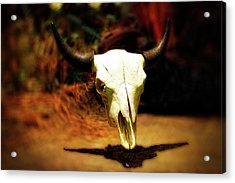 Wild West Bison Skull Acrylic Print