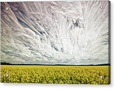 Wild Winds Acrylic Print by Matt Molloy