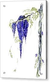 Wild Wisteria Acrylic Print