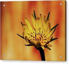 Wildbloom Acrylic Print