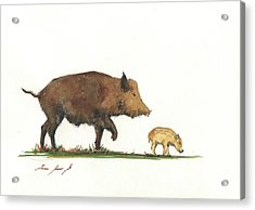 Wildboar Piglet Acrylic Print