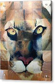 Wildcat Acrylic Print