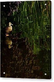 Wilderness Duck Acrylic Print
