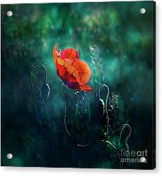 Wildest Dreams Acrylic Print