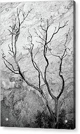 Wildfire Manzanita Acrylic Print