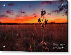 Wildfire Acrylic Print by Rivers Rudloff