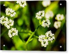 Wildflower - 3 Acrylic Print by Barry Jones