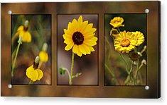 Wildflower 3 Acrylic Print by Jill Reger