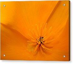 Wildflower Art Poppy Flower 6 Poppies Artwork Prints Cards Acrylic Print by Baslee Troutman