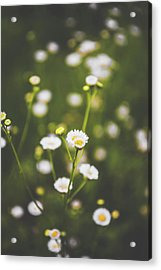 Acrylic Print featuring the photograph Wildflower Beauty by Shelby Young