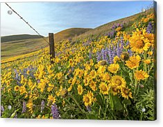 Wildflower Bonanza Acrylic Print