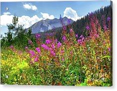 Wildflower Capital Acrylic Print