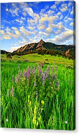 Wildflower Colors Acrylic Print