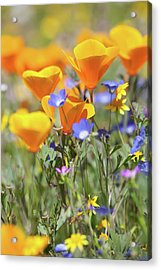 Acrylic Print featuring the photograph Wildflower Detail by Cliff Wassmann