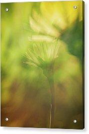 Wildflower..double Exposure Acrylic Print