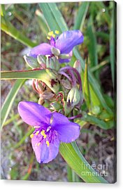Wildflower Acrylic Print