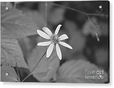 Acrylic Print featuring the photograph Wildflower by Eric Liller