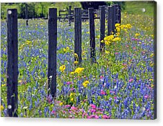 Wildflower Fenceline Acrylic Print by Teresa Blanton