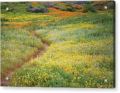 Acrylic Print featuring the photograph Wildflower Field Near Diamond Lake In California by Jetson Nguyen