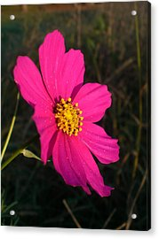 Wildflower Greeting The Day Acrylic Print by Wendy Robertson