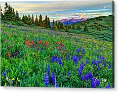 Wildflower Hill Acrylic Print by Scott Mahon