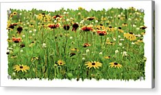 Wildflower Meadow Acrylic Print by JQ Licensing