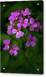 Acrylic Print featuring the photograph Wildflower Pallette by Timothy McIntyre