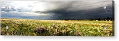 Wildflower Panorama 2008 Acrylic Print