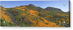 Acrylic Print featuring the photograph Wildflower Panoramic by Cliff Wassmann