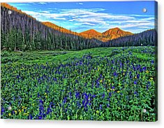 Acrylic Print featuring the photograph Wildflower Park by Scott Mahon