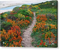 Wildflower Path At Ribera Beach Acrylic Print