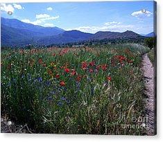 Wildflower Path Acrylic Print