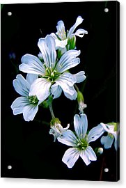 Wildflower Acrylic Print by Robert Knight
