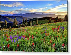Wildflower Sunset Hill Acrylic Print
