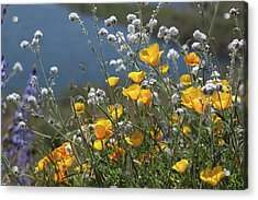 Acrylic Print featuring the photograph Wildflower Super Bloom At Diamond Valley Lake by Cliff Wassmann