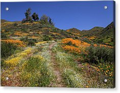 Acrylic Print featuring the photograph Wildflower Superbloom by Cliff Wassmann