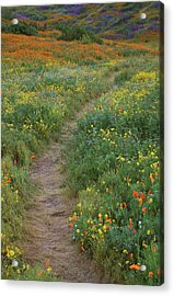 Acrylic Print featuring the photograph Wildflower Trail At Diamond Lake In California by Jetson Nguyen