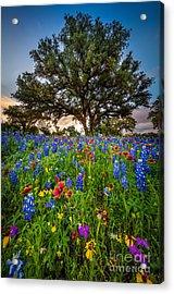 Wildflower Tree Acrylic Print