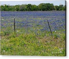 Wildflowers - Blue Horizon Acrylic Print by Lucyna A M Green