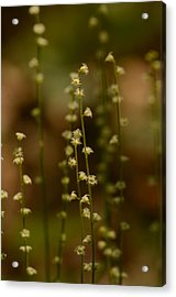 Wildflowers 1 Acrylic Print by Maria Suhr
