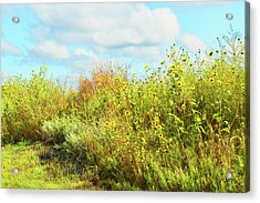 Acrylic Print featuring the photograph Wildflowers Along A Country Road  Photography  by Ann Powell