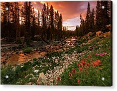 Wildflowers Along The Provo River. Acrylic Print by Johnny Adolphson