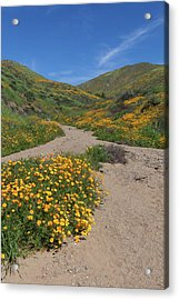 Acrylic Print featuring the photograph Wildflowers Along Walker Canyone by Cliff Wassmann
