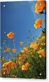Acrylic Print featuring the photograph Wildflowers And Blue Sky by Cliff Wassmann