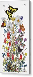 Wildflowers And Butterflies Of The Valley Acrylic Print